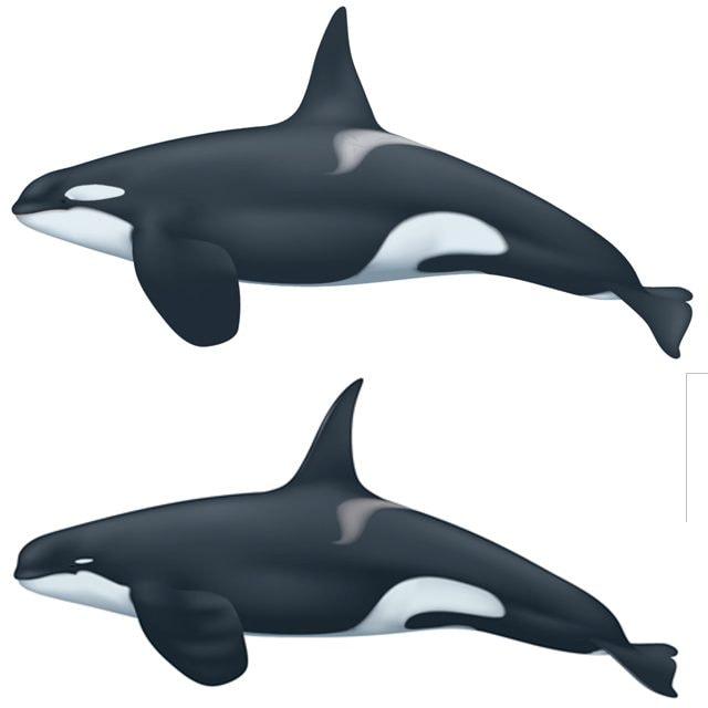 Orca tipo A e tipo D. Credit: NOAA