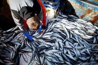 Cambiamenti climatici, il numero di pesci negli oceani sta crollando: nuova conferma