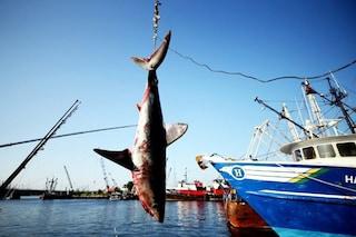 17 specie di squalo sono ora a rischio estinzione ed è solo colpa nostra