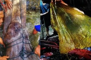 Balena dal becco uccisa da 40 kg di sacchi di plastica: morta tra atroci sofferenze