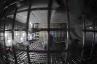 I topi nello spazio hanno iniziato a correre in cerchio: cosa succede sull'ISS
