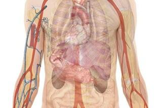 Situs inversus, cos'è la rara anomalia che fa nascere con gli organi al contrario