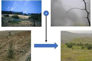 Acqua dalla nebbia per rinverdire l'aridissimo deserto di Atacama: la ricerca italiana