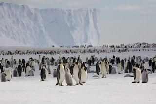 Strage di pinguini in Antartide, morti migliaia di piccoli a causa nostra. Cos'è successo