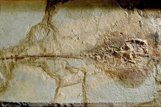 Le prime uova fossili di razza scoperte da italiani: hanno 50 milioni di anni