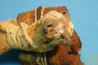 Scoperto il mix di droghe usato 1.000 anni fa per rituali sciamanici