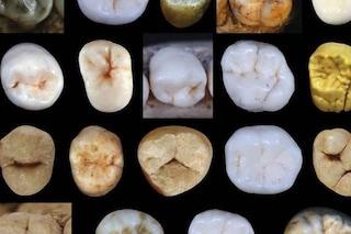 Quando l'uomo moderno si è separato dal Neanderthal? La risposta è nei denti