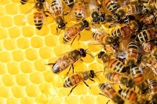 Addio miele in Italia: cosa sta succedendo alle api, allarme Coldiretti