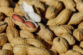 Allergia alle arachidi, l'immunoterapia orale è rischiosa: anafilassi più probabile
