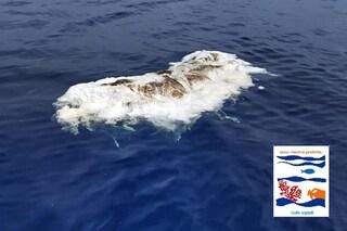Quarto cucciolo di capodoglio morto in Sicilia in pochi giorni: mistero sulle cause