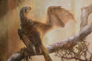 Nuova specie di dinosauro con ali da pipistrello: chi era l'Ambechteryx longibrachium