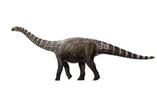 I giganteschi dinosauri sauropodi camminavano in punta di piedi, come con un paio di tacchi
