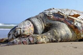 Un milione di specie rischia l'estinzione a causa nostra: l'allarme degli scienziati