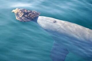 I delfini si scelgono gli amici proprio come noi: chi si somiglia, si piglia