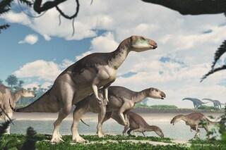 Nuova specie di dinosauro australiano emersa da una miniera di opali: fossili di una mandria