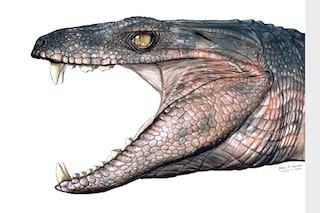 Quando i coccodrilli erano vegetariani e si adattavano ad ambienti molto diversi tra loro