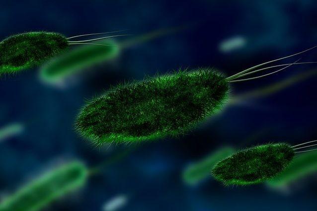 Raro batterio uccide 12 persone, è allarme: ecco i sintomi