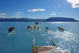 Groenlandia, cani trainano slitta sull'acqua: foto mostra scioglimento record dei ghiacci