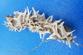 Misteriosa creatura morta trovata sulla spiaggia di un parco della Carolina del Nord