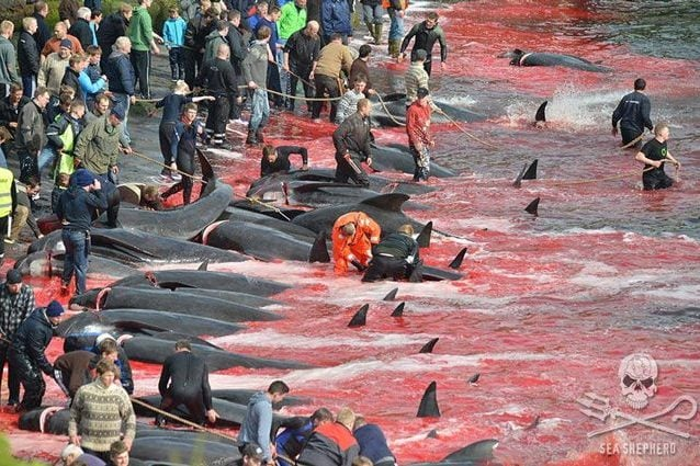 Immagine di repertorio. Credit: Sea Shepherd