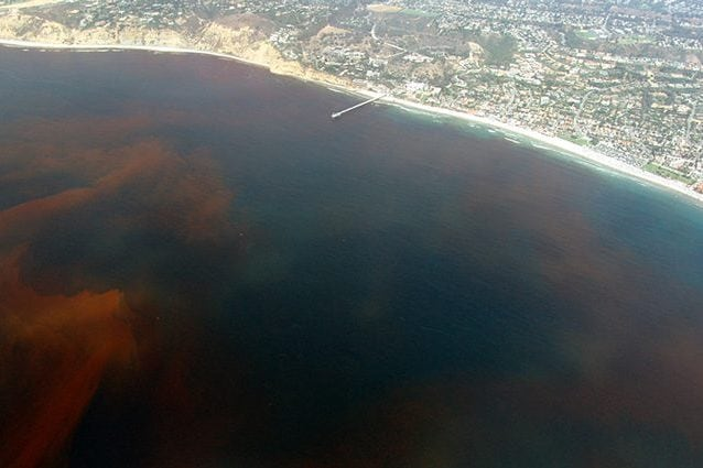 Una imponente marea rossa a La Jolla, in California