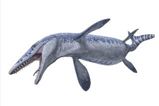 Il fossile di un magnifico mosasauro, star di Jurassic World, scoperto per caso in Canada