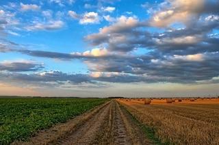I cambiamenti climatici stanno già colpendo l'agricoltura: cibo a rischio