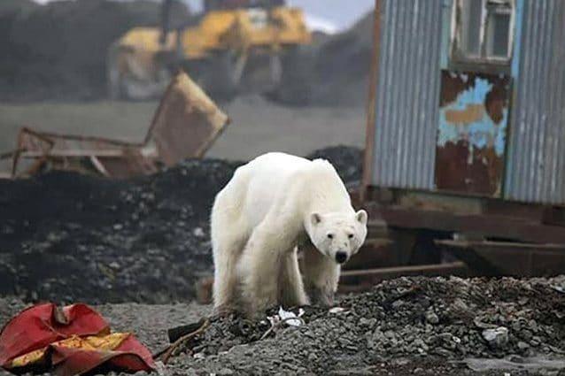 Credit: Irina Slava, Zapolyarnaya Pravda/Facebook/The Siberian Times