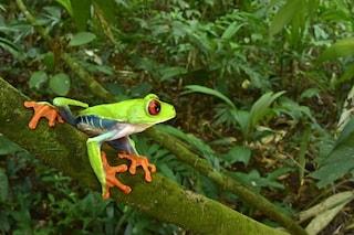 """Paradiso della biodiversità emerge tra i resti della leggendaria """"Città Bianca"""" in Honduras"""