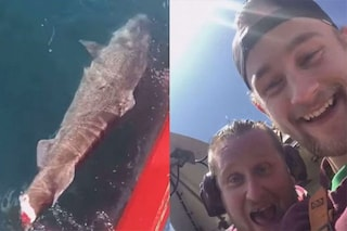 """Pescatori tagliano la coda a uno squalo e lo ributtano in mare: """"buona fortuna col nuoto"""""""