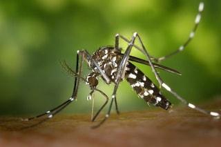 Zanzare killer: ecco tutte le malattie che si possono contrarre con una puntura