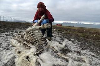 Strage di renne in Norvegia, 200 morte di fame per colpa dei cambiamenti climatici killer