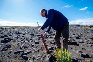 Ripiantare gli alberi rasi al suolo dai vichinghi, il progetto spettacolare dell'Islanda
