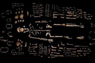 L'andatura unica dell'Homo naledi, il nuovo bipede che sapeva spostarsi tra gli alberi