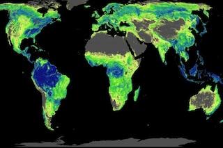 Cambiamenti climatici, la soluzione non è hi-tech: dobbiamo tornare alle basi e piantare alberi