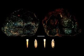 I resti umani più antichi del Nord Italia emersi da una grotta piemontese: hanno 300mila anni