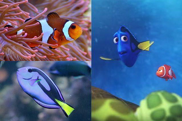 "Credit: a destra screenshot ""Alla ricerca di Dory""/Trailer Youtube/DisneyIT"