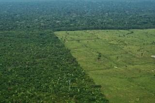Amazzonia, distrutto il 278% in più di foresta rispetto al 2018: stiamo uccidendo il nostro polmone