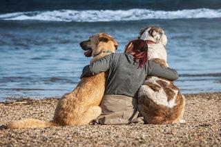 Giornata Mondiale del cane: perché gli amici a quattro zampe migliorano la nostra vita