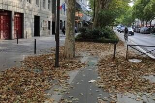L'autunno d'estate: perché gli alberi di Parigi stanno perdendo tutte le foglie