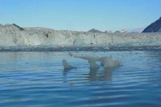 Dramma nell'Artico: il ghiaccio marino sta scomparendo, secondo record negativo, i rischi