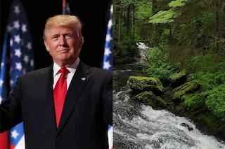 Trump vuole disboscare la più grande foresta degli USA per costruire strade, miniere e industrie