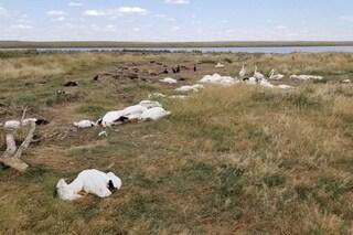 Devastante grandinata uccide e ferisce più di 11mila uccelli di un lago: moltissimi morti in volo