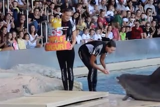 Auguri al delfino Pelè: ma se ti sembra felice nel delfinario, non sai più cos'è la libertà