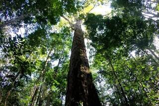 Amazzonia, non solo incendi: scoperti alberi giganteschi di 80 metri. Scienziati increduli