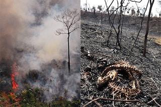 Incendi in Amazzonia, 265 specie già in grave pericolo minacciate dalle fiamme: l'allarme del WWF