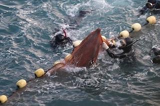Caccia ai delfini, apre nuova baia in Giappone: i cetacei finiranno in parchi marini e delfinari