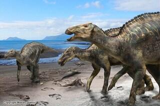 Nuova specie di dinosauro dal becco d'anatra scoperta in Giappone: chi era il Kamuysaurus japonicus