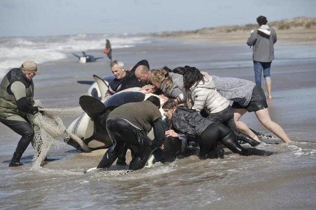 Credit: Swim for Freedom–Marine Mammal Advocates/facebook