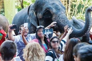 Perché i selfie uccidono gli animali selvatici: scienziati contro i vip a caccia di like